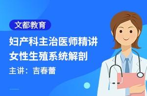 文都教育妇产科主治医师精讲-女性生殖系统解剖